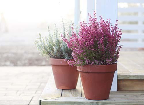 pflanzen berwintern tipps f r die kalte jahreszeit. Black Bedroom Furniture Sets. Home Design Ideas