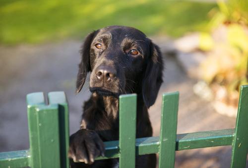 Gartenzaun Hunde