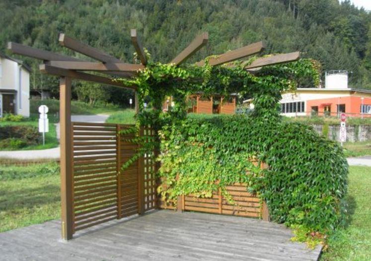 sichtschutz pflanzen f r jeden garten von der hecke bis zur ranke gartenblog von fr schl. Black Bedroom Furniture Sets. Home Design Ideas