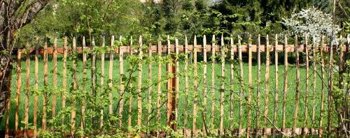 Sichtschutz-Pflanzen Titelbild