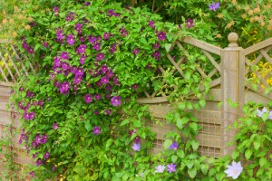 Sichtschutz Kletterpflanzen Tipps Froschl Blog