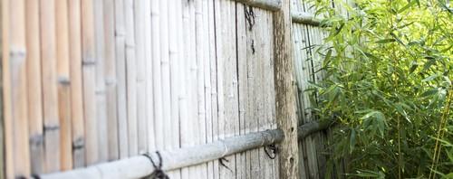 Bambus am Zaun