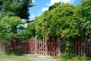 Wachstum über Zaun