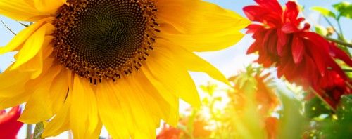 Gartenblumen Teaserbild